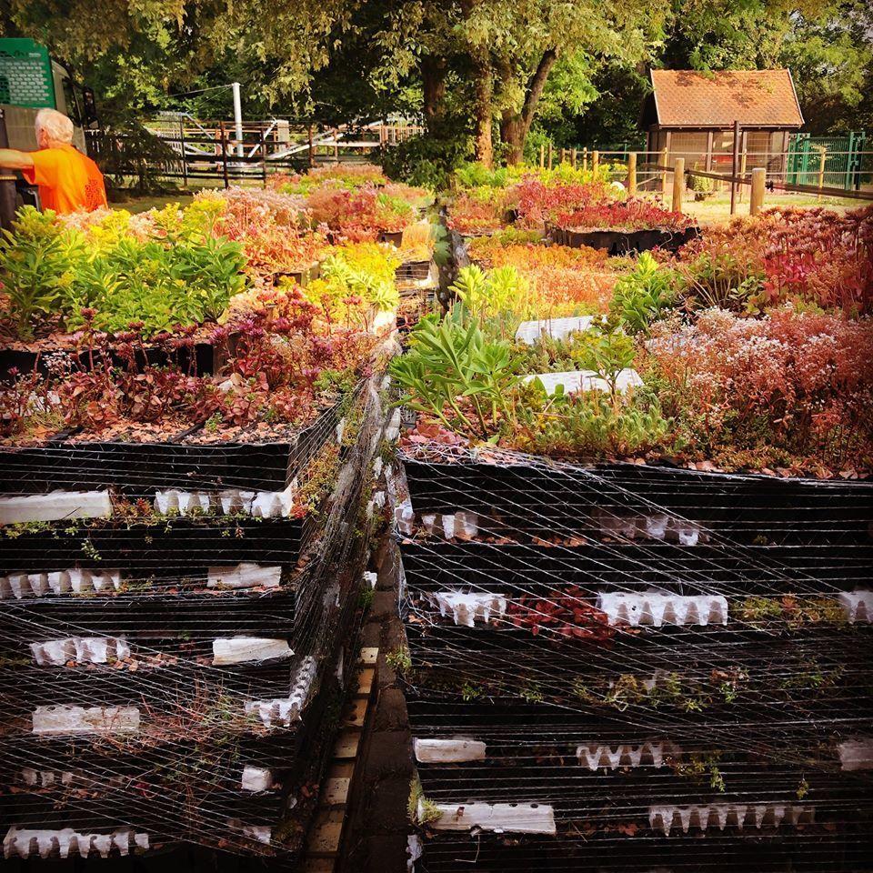 CAISSETTES PRECULTIVEES PREPAREES AVEC SOIN PAR TOIT-VEGETALISE. Présence de tasseaux en polystyrène pour éviter l'écrasement des plantes.