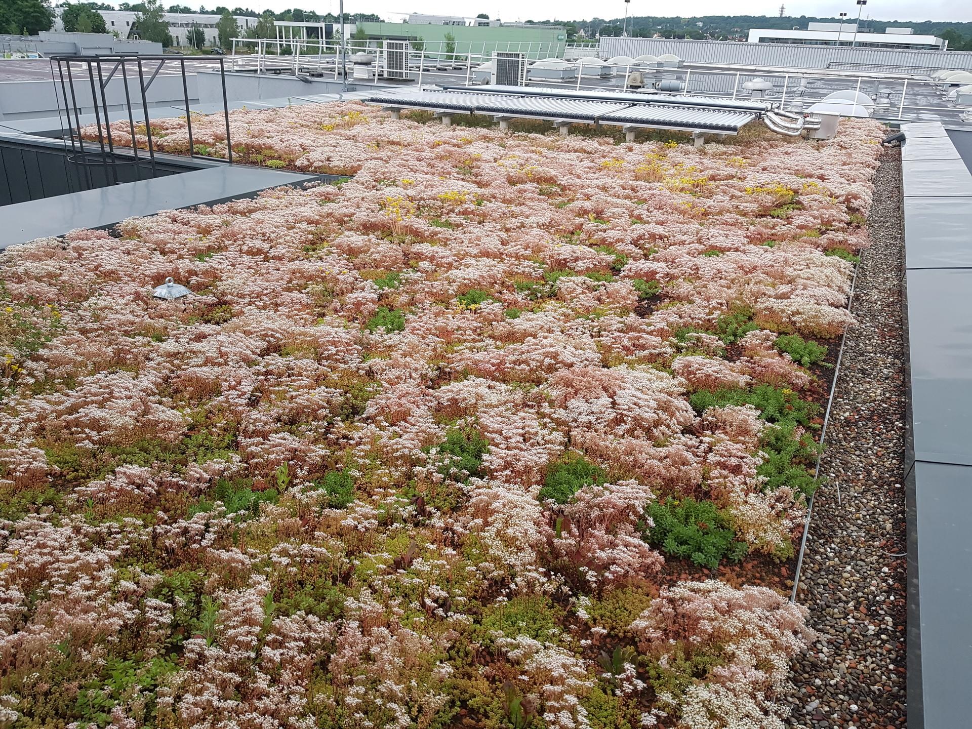 Toiture végétalisée par plantation de mini-mottes en mélange d'une dizaine d'espèces.